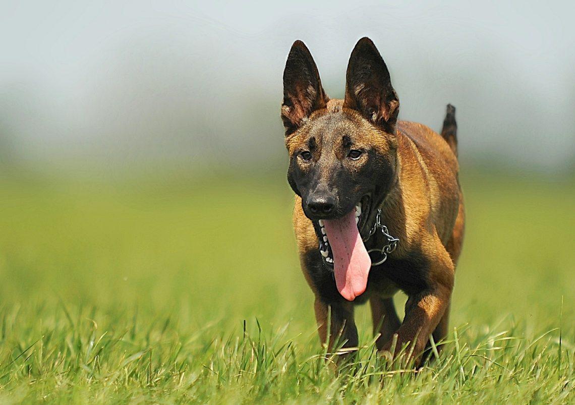 Dog Owners Bewar